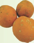 Detalhes do produto Mudas de Limão Cravo