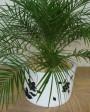 Muda de Palmeira Fênix - Foto 6