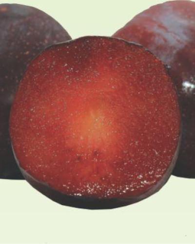 Detalhes do produto Muda de Ameixa Roxa