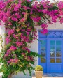 Muda de primavera Trepadeira Pink - Foto 1