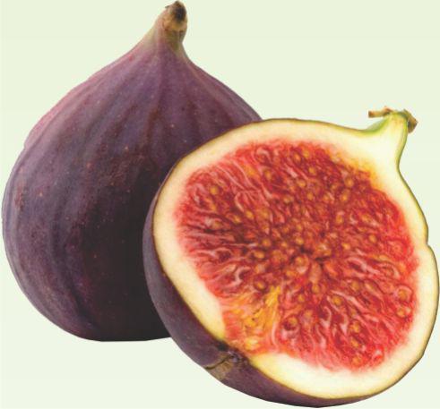 Muda de Figo roxo