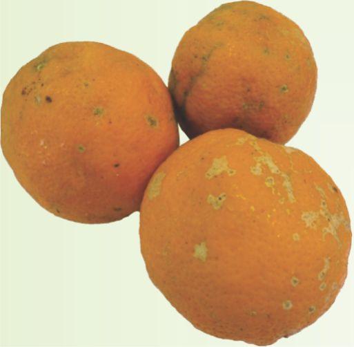 Limão Cravo