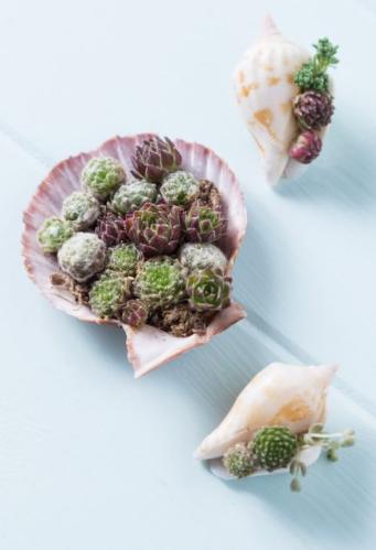 Ideias para mini jardins de suculentas